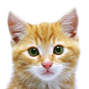 Стерилизация кошек в Челябинске