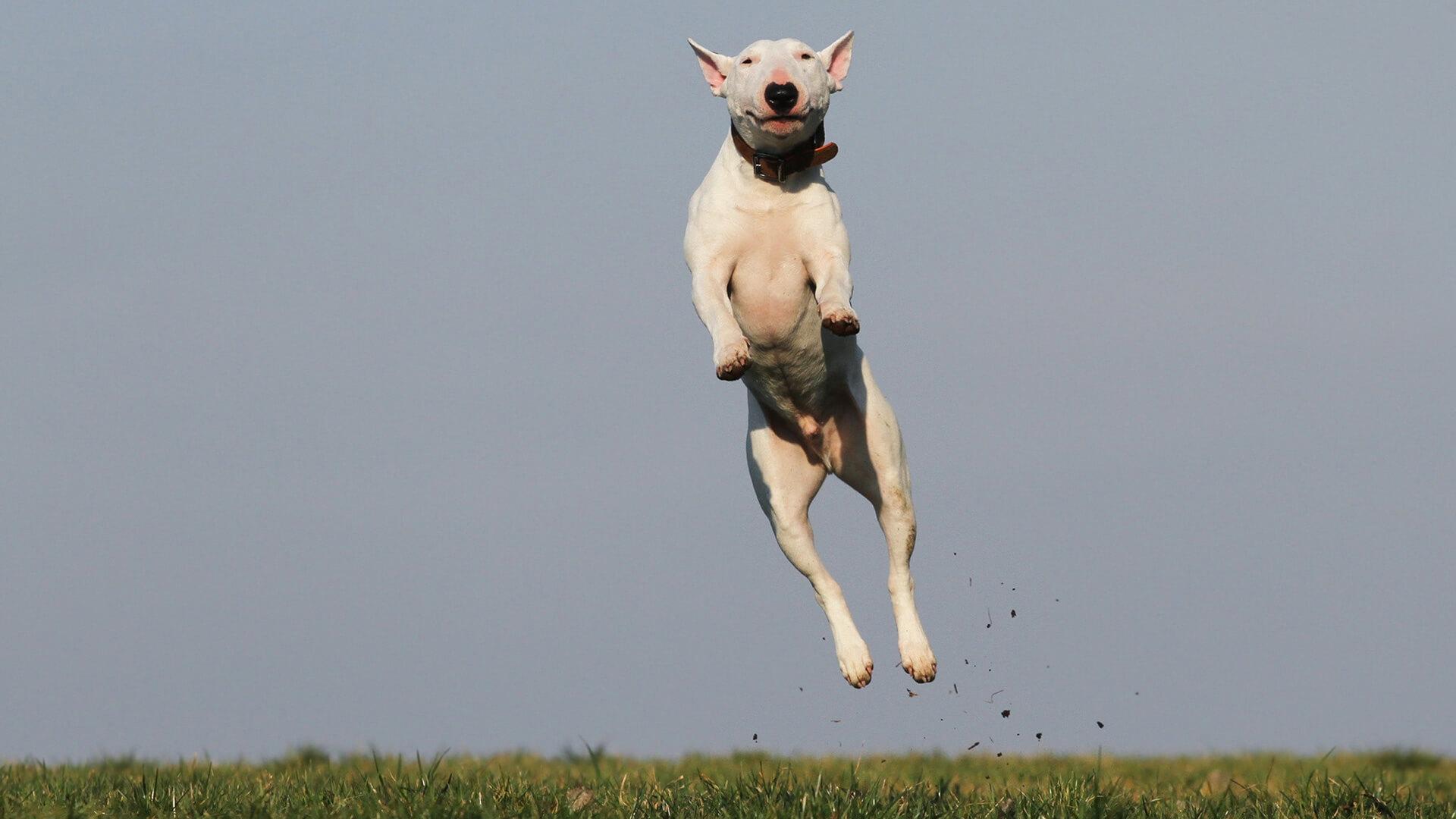 Экспресс-диагностика вирусных заболеваний собак и кошек